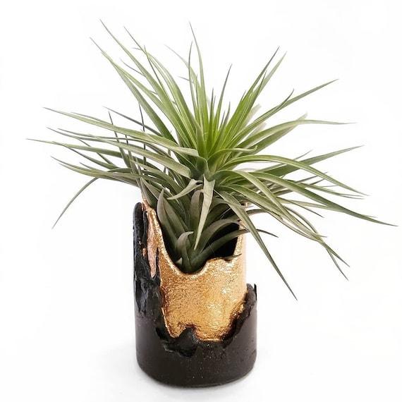 Black concrete planter with gold gilding details/Black and Gold Decor/Succulent Planter/vase/mantel decoration