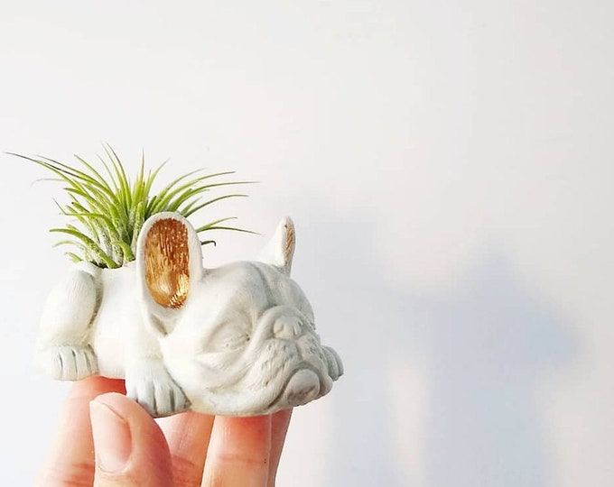 Featured listing image: Made-to-Order Concrete Frenchie w/air plant French Bull Dog,Dog Planter, Frenchie, Ring Holder,Frenchie Mom,Bulldog,Animal planter,Pet Lover