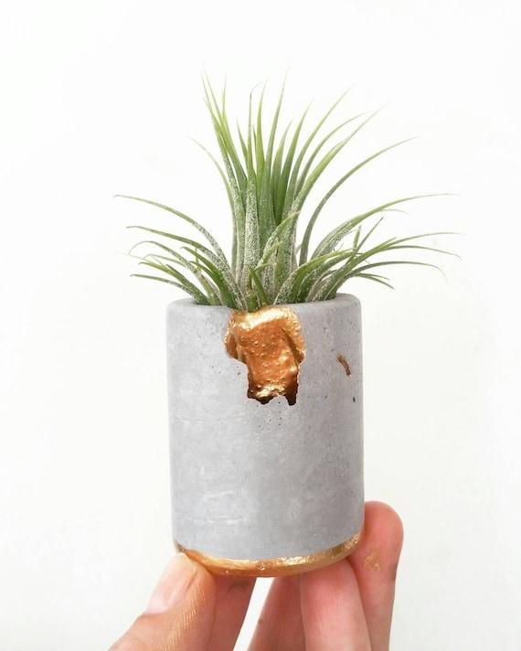 Concrete Gold Leafing Air Plant Holder,Modern Metallic planter,Cactus Planter,Mini Planter,Indoor Planter, Desk planter,Concrete Home Decor