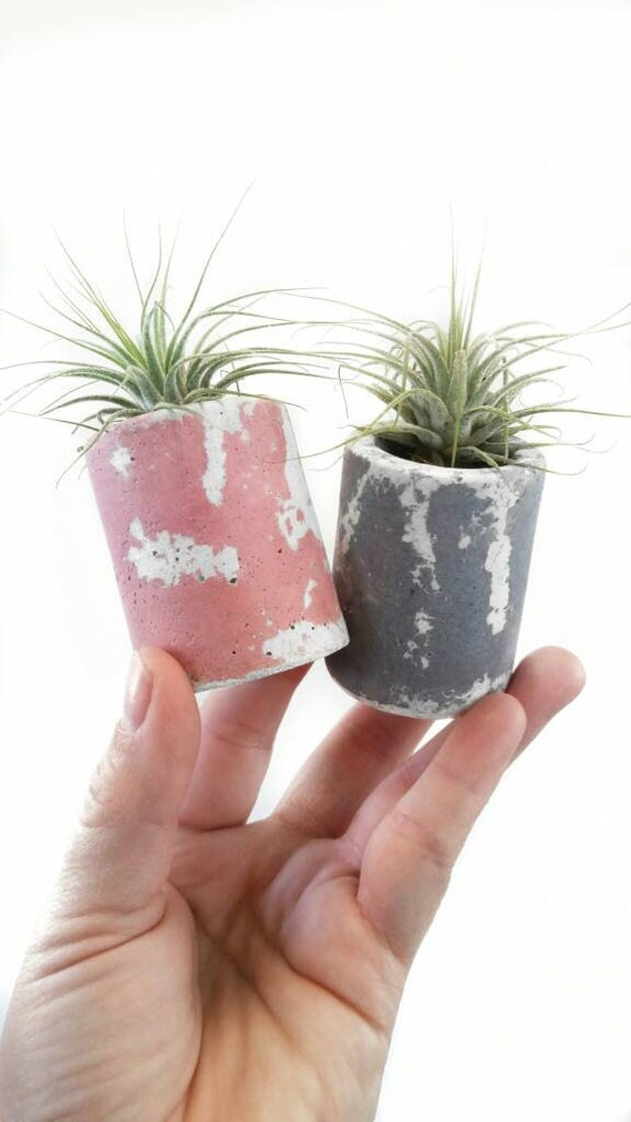 Marbled Mini Concrete Air Plant Holder, gray and white decor, pink decor, Cactus Planter,Air Plant,Desk Planter,Mini Planter, Modern planter