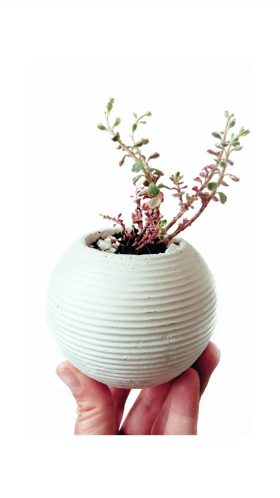 Modern Planter/Concrete Planter/Cactus Planter/Modern Decor/Succulent Planter/Indoor Planter/Office Planter/Sphere planter/orb planter