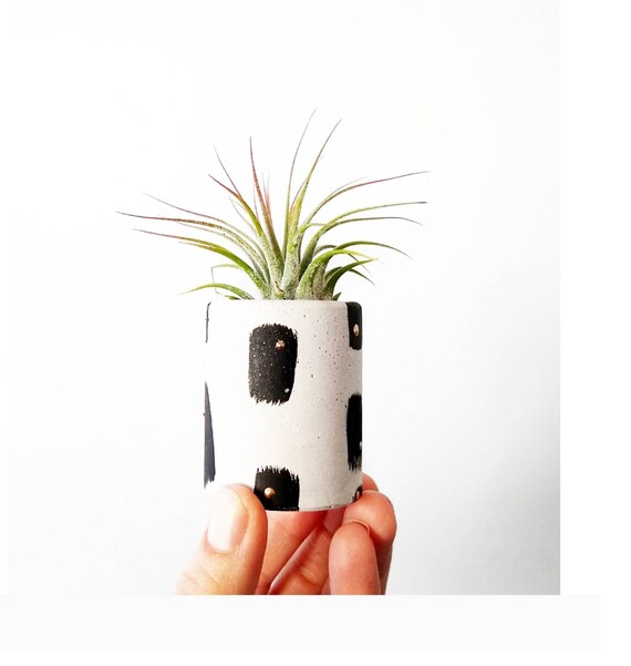 White & Black Concrete Planter/Modern Planter/Air Plant Holder/Indoor Office Planter/Succulent/Mini Planter/Midcentury Modern/match holder