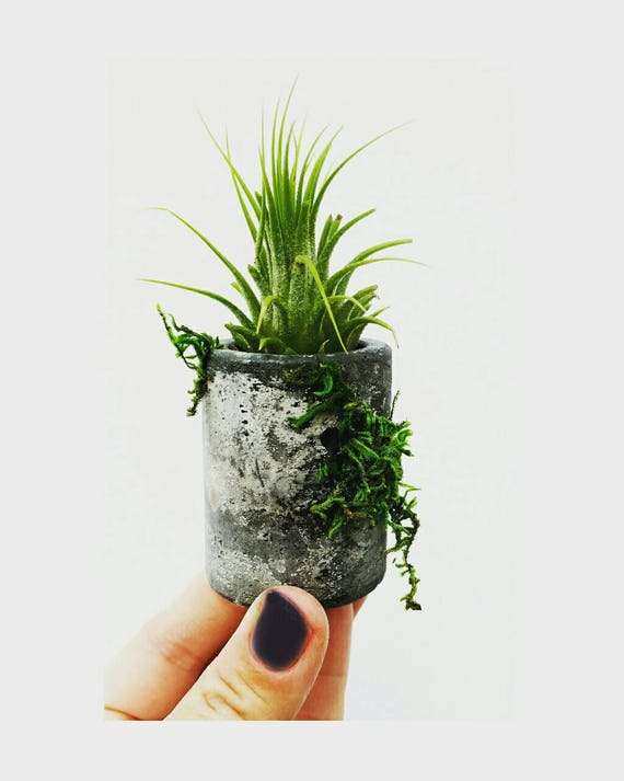 Mini Concrete & Moss Planter, Air Plant holder,Cactus Planter,Indoor Planter,Concrete Home Decor,Mini Planter, Plant lover gift