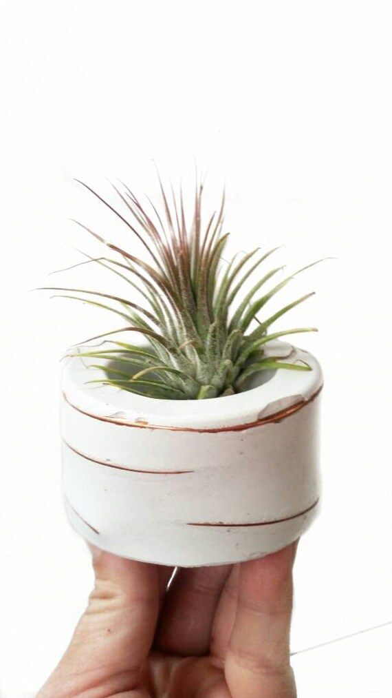White Concrete Air Plant Holder,Modern planter,Cactus Planter,Air Plant, Ring Dish,Desk Planter, candle holder,Plant lover, Mini Planter
