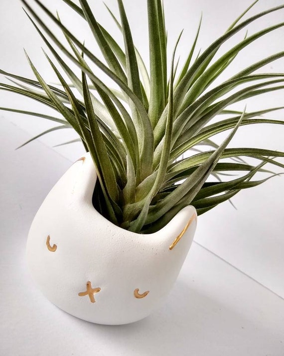 White Concrete Cat Planter/Succulent planter/Air Plant Holder/black Planter/HomenDecor/Office Decor/Housewarming Gift/Cat Mom