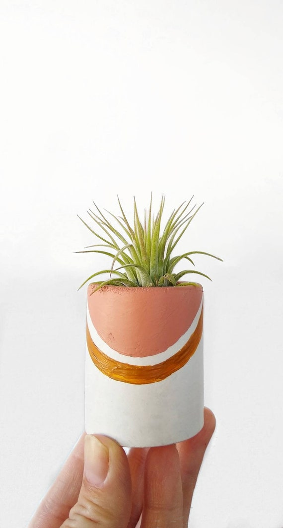 Concrete Air Plant Holder,Modern Metallic planter,Cactus Planter,Cactus Decor, Succulent Planter, Indoor Planter, Desk planter, rainbow
