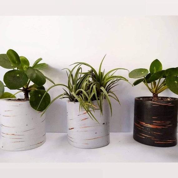 Copper and Concrete Planter/Modern Planter/Industrial style/Office Planter/Succulent Planter/ Indoor Planter/copper accents/Minimalist