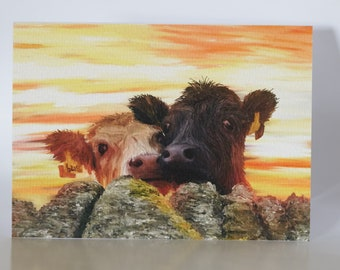 """The Moffat Cows - 5"""" x 7"""" greetings card c/w with white envelope and packed in cellobag"""