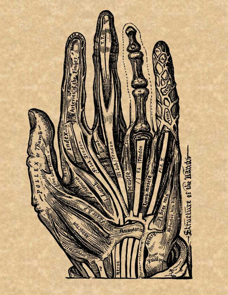 Palmistry Palm Reading Chart Art Print on Vintage Book Page Home Decor Gifts