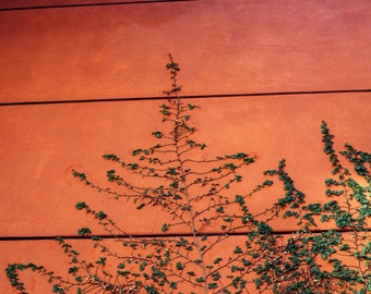 Orange Creeping, Fine Art Canvas Gallery Wrap, Nice, France, Plant, Fern, Colorful