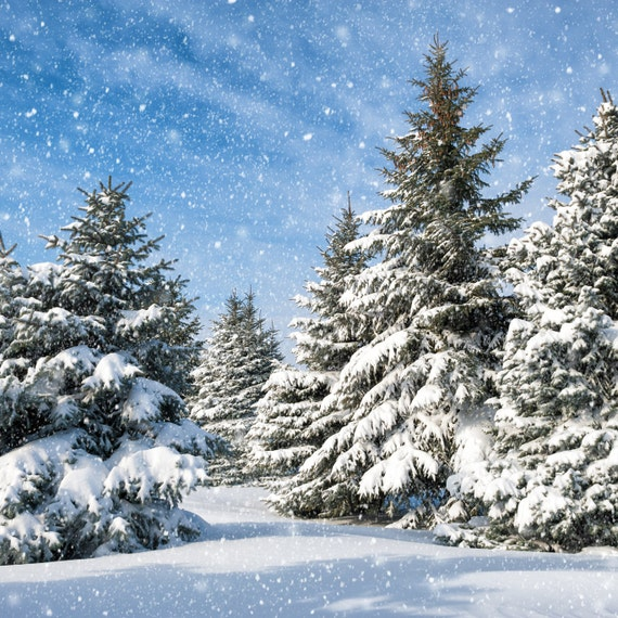 Snow Forest Backdrop Christmas Tree White Snow Winter Etsy