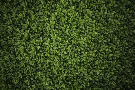 green grass wall backdrop green grass floor printed fabric etsy