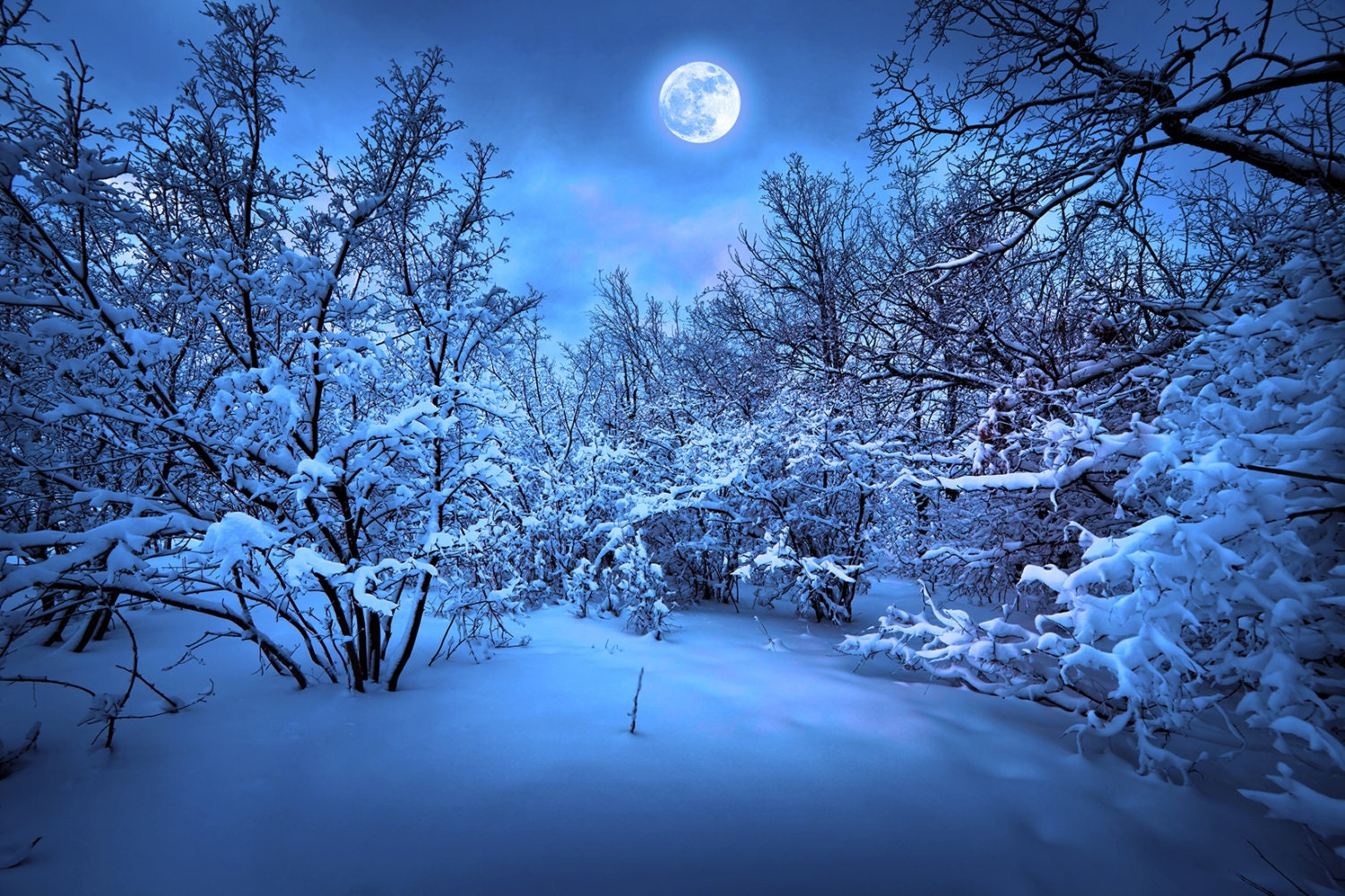 20x10ft Snowy Park Road Frosty Trees Road Lanterns Fence Backdrop Polyester Night Snowscape Photography Background Child Baby Adult Portrait Shoot Winter Scenic Wallpaper