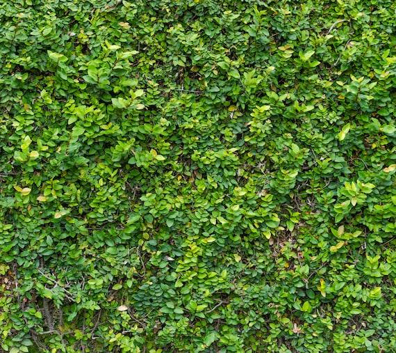 green grass wall backdrop spring or summer bush wall etsy