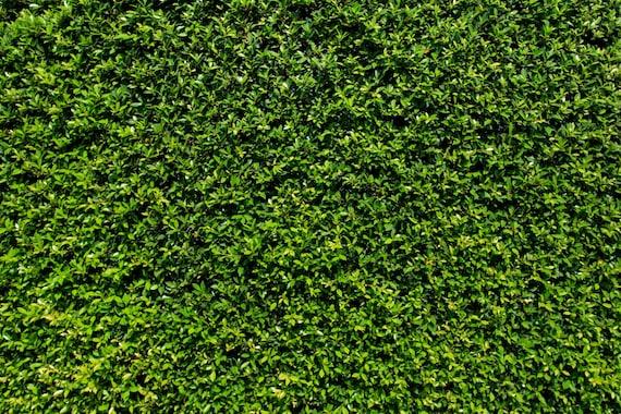 grass wall backdrop green bush wall spring summer etsy