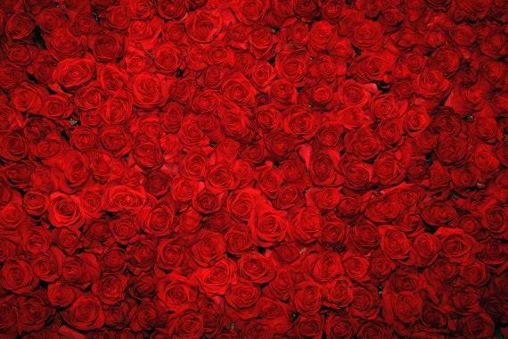 GoHeBe Closeup Red Rose Flower Wall Backdrop 10x7ft Vinyl Floral Wedding Stage Background Wedding Celebration Photo Booth Flower Decoration Bride Portrait Shoot Bridal Shower Banner Lovers Shoot