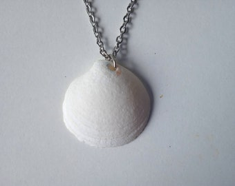 White Dosinia Shell on a Silver Chain Necklace