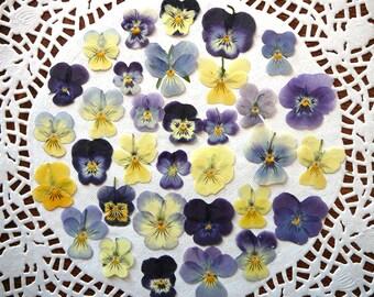 Dried pressed flowers, real dried pansies, pressed violas 20 pcs.