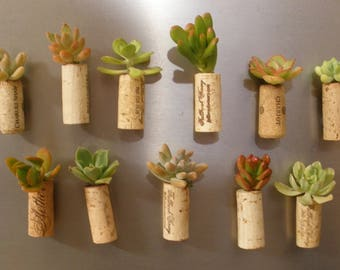 Set of 5 - Succulent Cork Magnets, wedding favors, birthday favors, corporate gifts, office gifts, unique gifts, unusual gifts