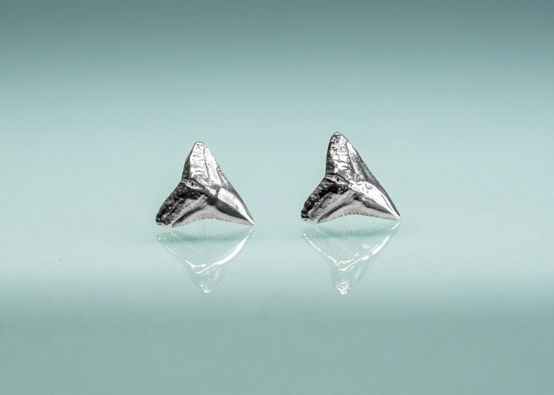 Bull Shark Tooth Stud Earrings  Sterling Sharks Teeth Studs image 0