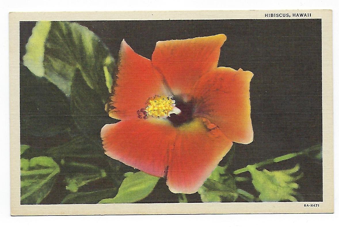 Hibiscus flower hawaii state flower vintage linen postcard etsy zoom izmirmasajfo
