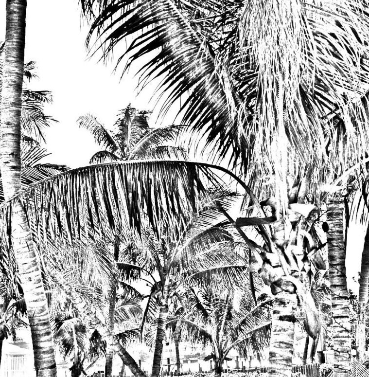 Coconut Palm Gray Scale Palm Tree Digital Download Etsy