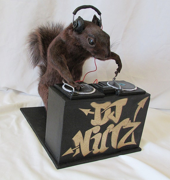 dj nutz free shipping taxidermy squirrel etsy