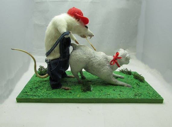 Taxidermy Rat With Sheep Adult Theme And Humor Free