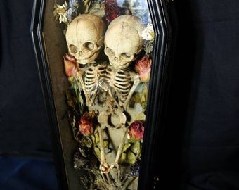 Fetus Siamese twin skeleton in casket handmade skeleton and casket