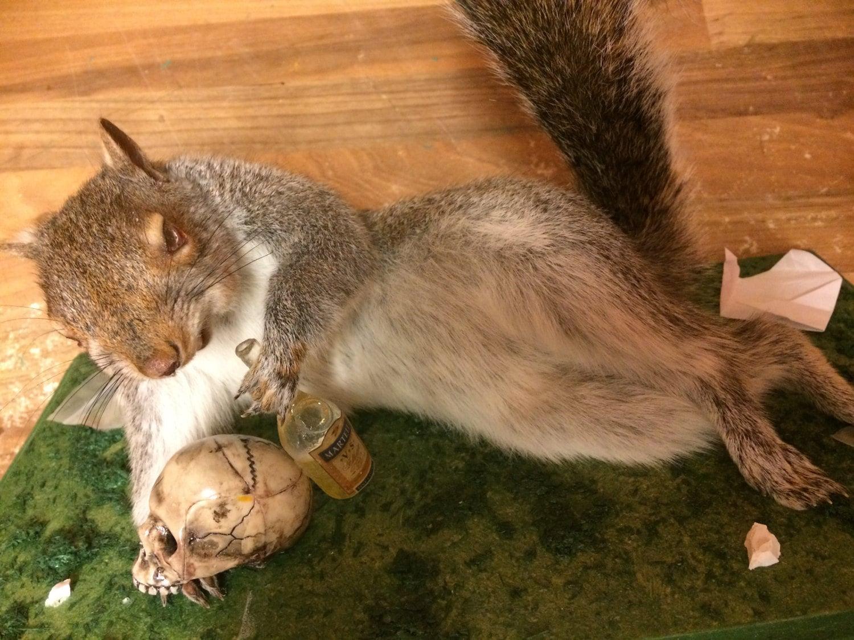 Verrückter Drogen Eichhörnchen. Aussehen versandkostenfrei   Etsy