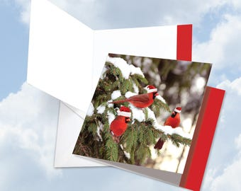 JQ5030DXTG New Jumbo Square-Top Christmas Thank You Card: Christmas for the Birds Featuring Birds Dressed Up For The Holidays w/ Env