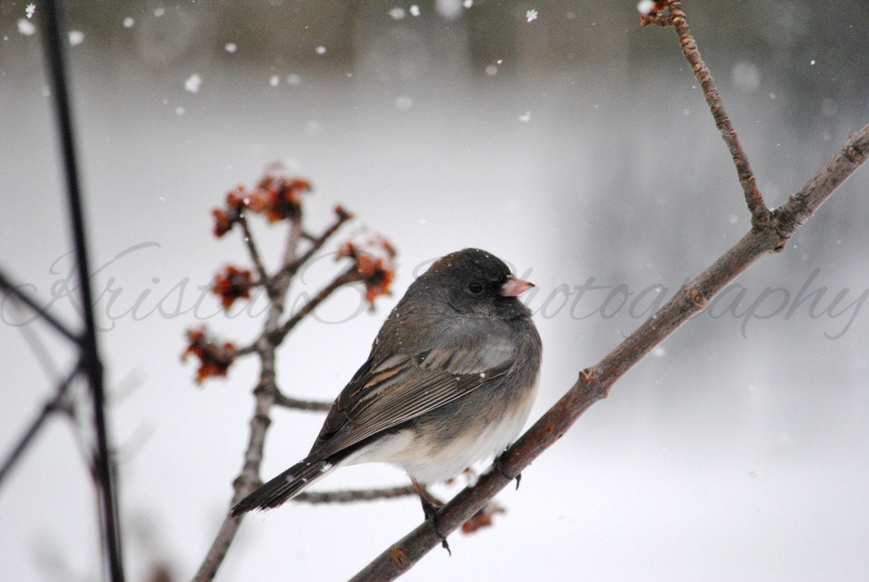 Dark-Eyed Junco songbird sunset art nature photo print home decor gift