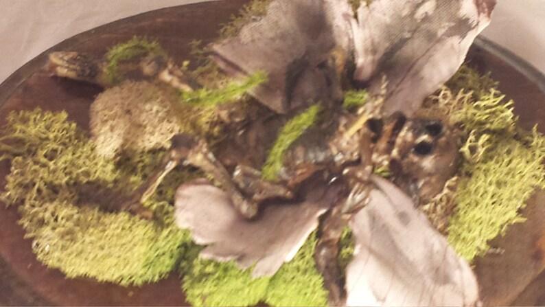 Murdered Fairy Mummified