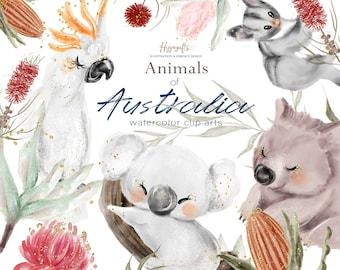 Watercolor animals of Australia clip art, Australia animals illustration, Australia flowers clip art,Aussie animals,Aussie clip arts U0071
