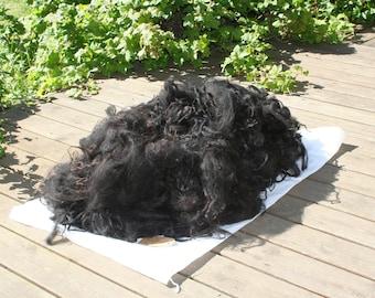 Beautiful black fleece of Lúsý (684gr)