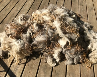 Grey morit lamb fleece (593 grams)