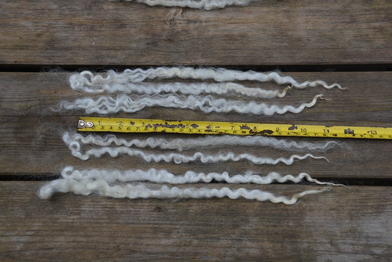 Leicester long wool locks washed 45 gram 1.58 oz