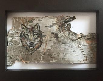 Wolf Colour Pencil Drawing on Birchbark