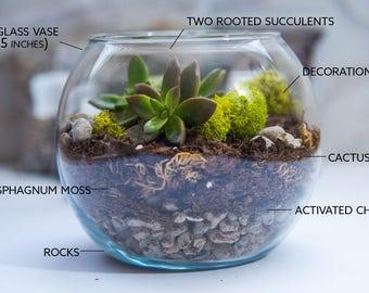 MEDIUM size Succulent Terrarium Kit, Succulent Terrarium, Glass Terrarium, gift for her, diy Gifts, father's day