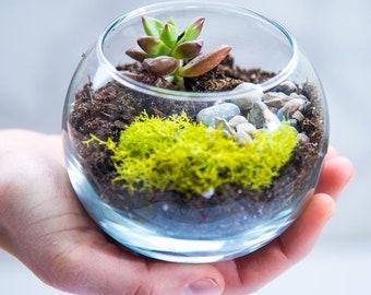 Terrarium kit MINI, succulent terrarium kit, diy terrarium kit, garden gift, succulents, plants, moss