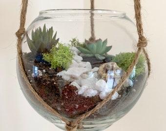 Terrarium Plants Etsy