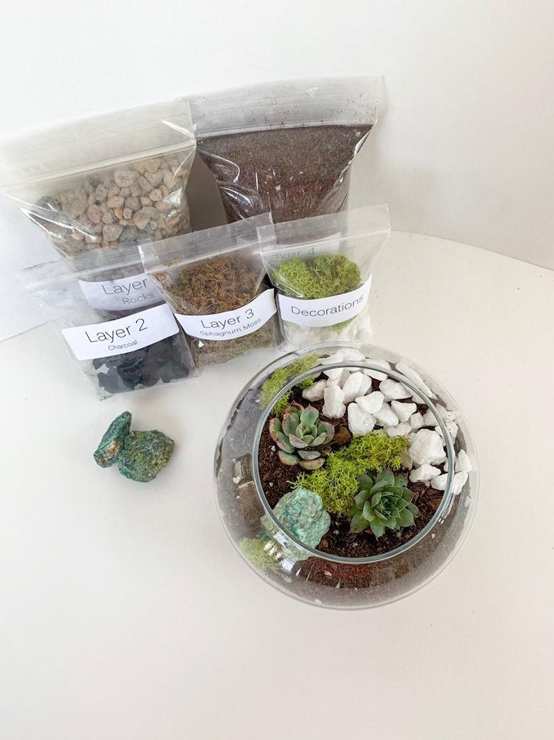 Chrysocolla Terrarium Kit Succulent Terrarium Kit Diy Etsy