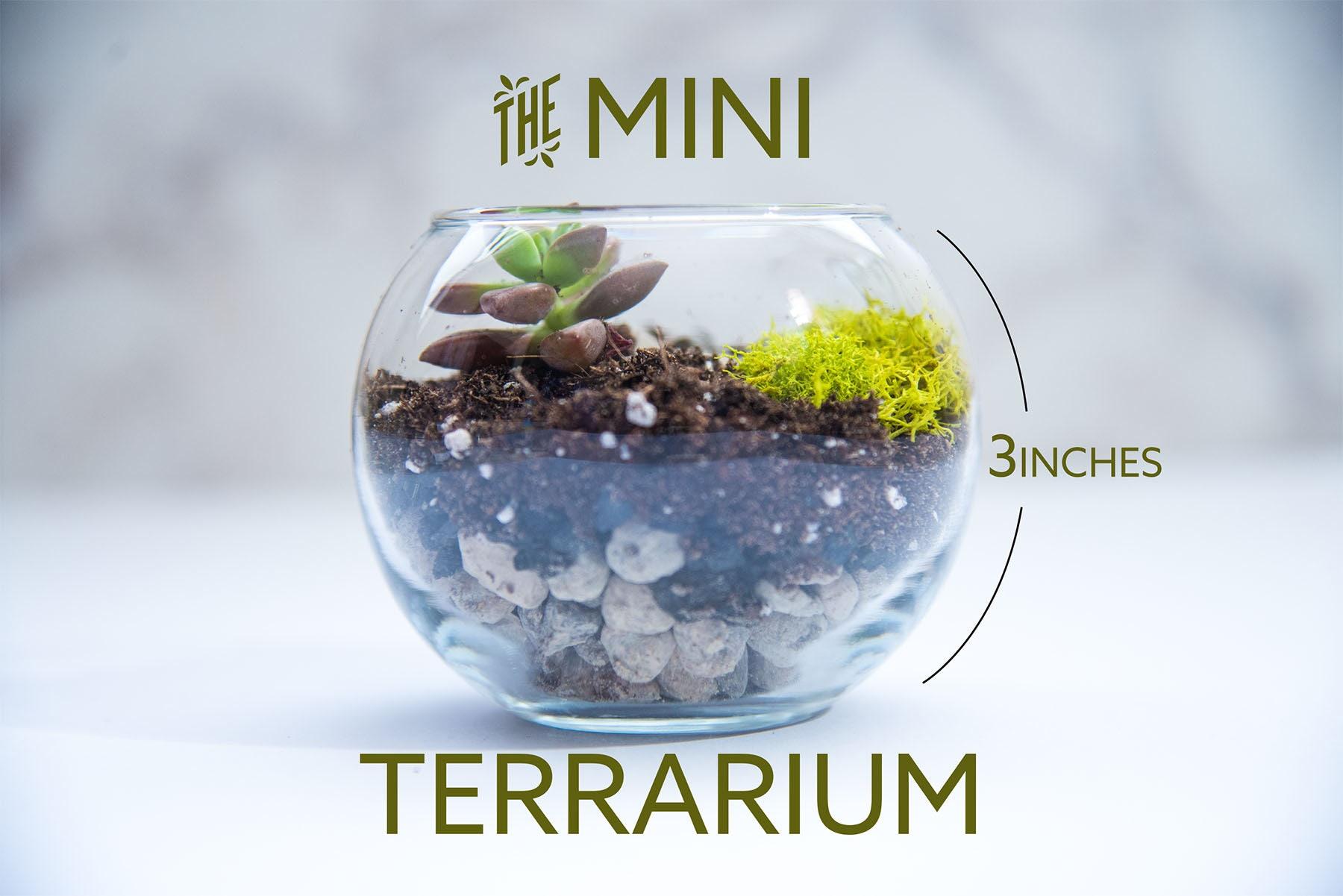 Succulent Terrarium Mini Mini Terrarium Diy Terrarium Etsy