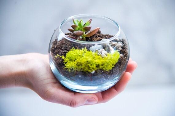 Terrarium Kit Mini Succulent Terrarium Kit Diy Terrarium Etsy