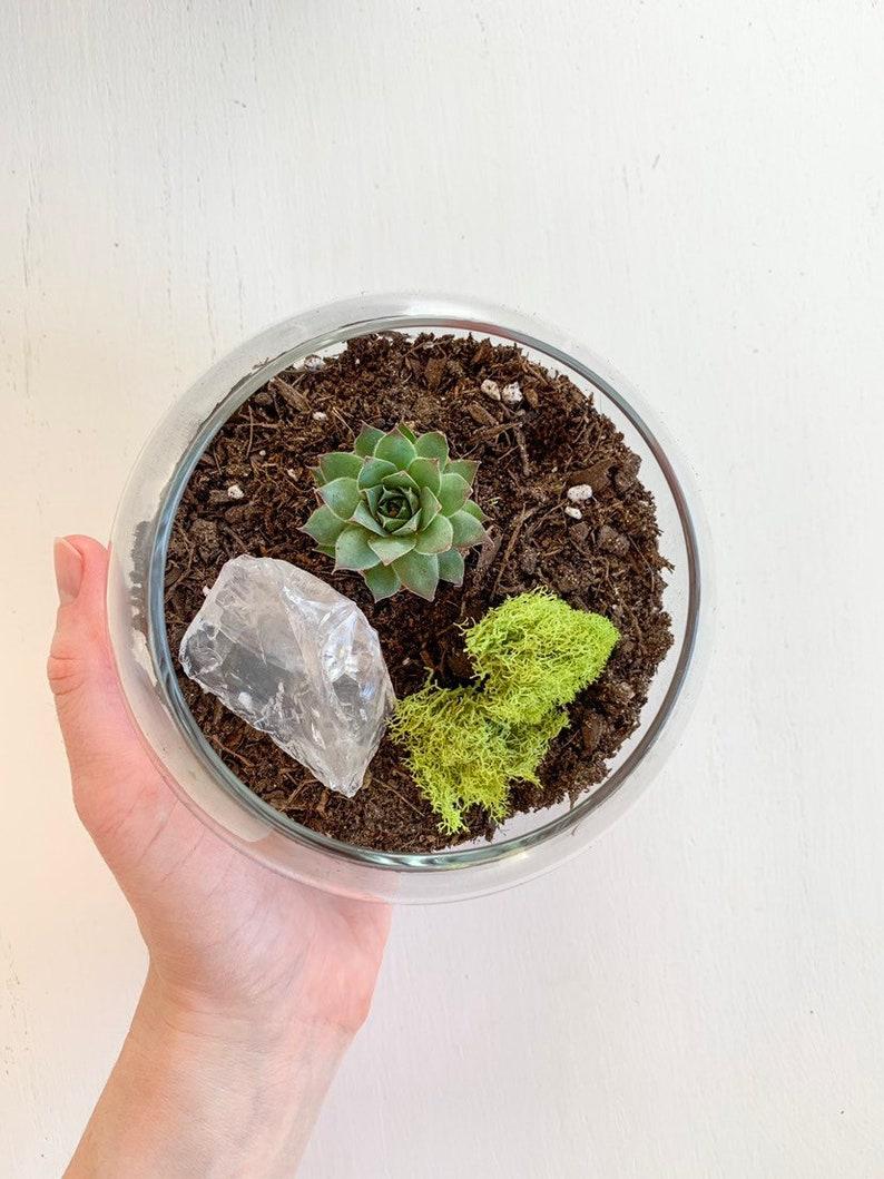 Mini Moon Quartz Succulent Terrarium Succulent Terrarium Kit Etsy