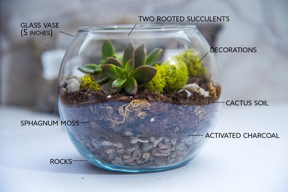 Glass Bowl Terrarium Succulent Glass Decorating Ideas