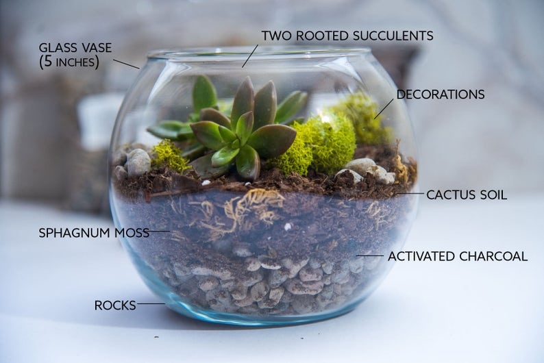 MEDIUM size Succulent Terrarium Kit, Succulent Terrarium, gift for her, diy  Gifts