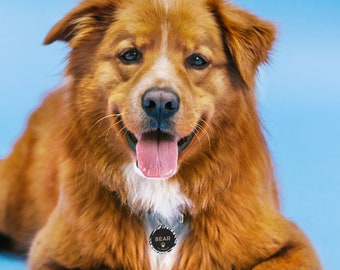 Pet ID Tag, Personalised Dog Tag For Collar, Zebra Print Pet Tag