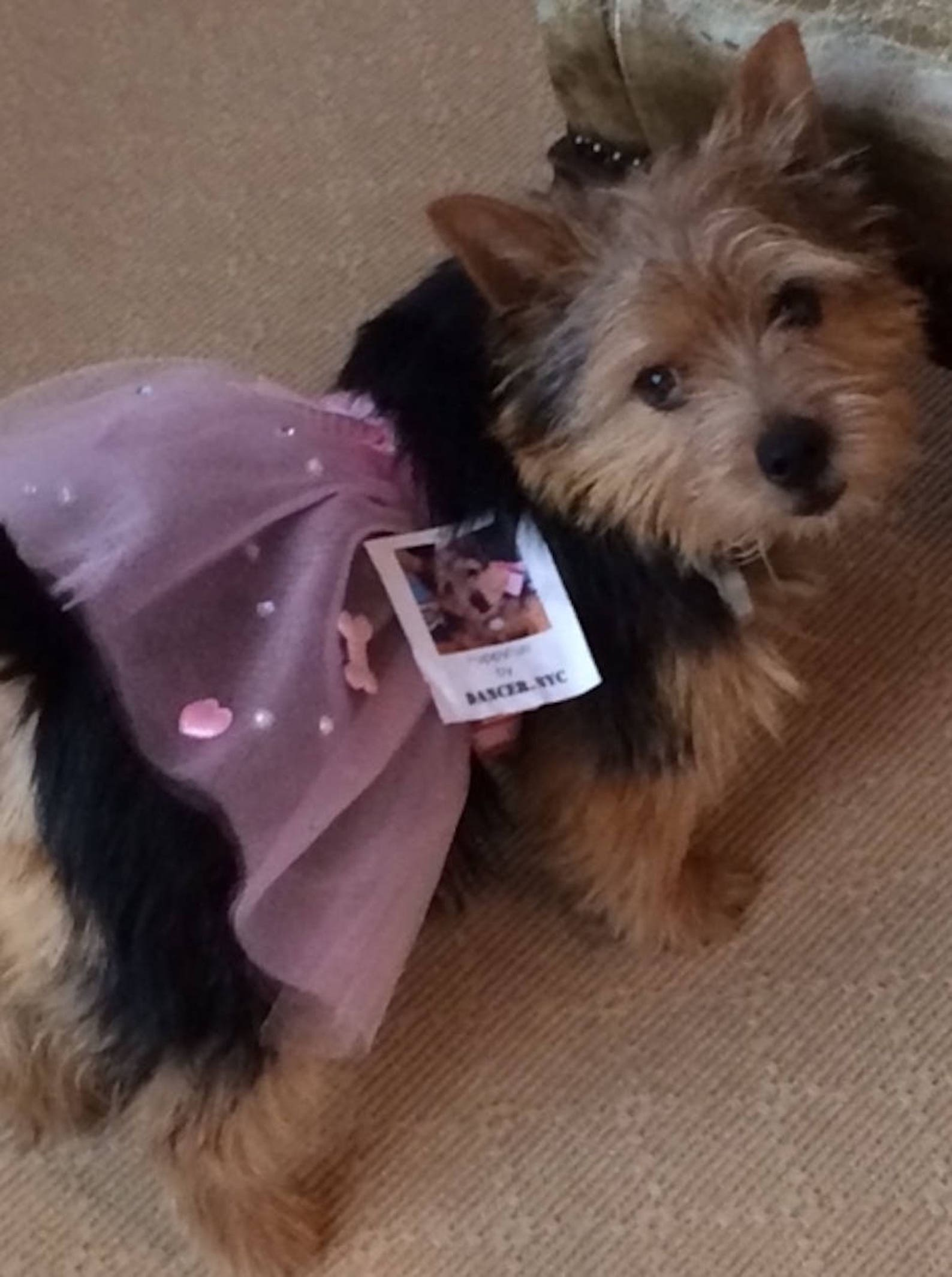 puppyfun - handmade ballet tutu for dogs