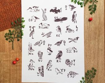 Bird alphabet poster